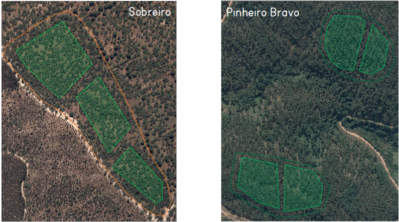 Satellite images of forest occupation